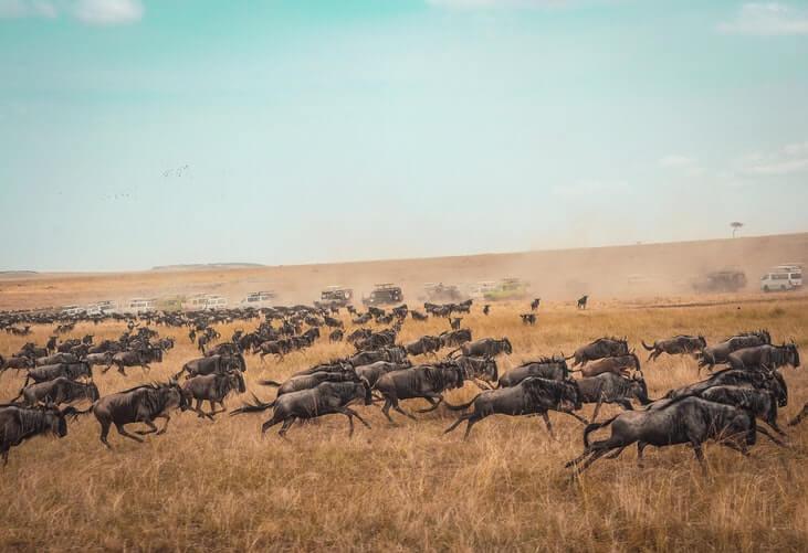 cosa-non-perdere-kenya-masai-mara