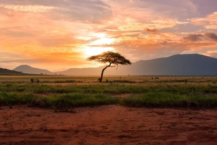kenya-cosa-non-perdere-savana-tsavo-